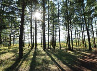 So erholsam ist Urlaub im Teutoburger Wald – Inklusive Insider Tipps